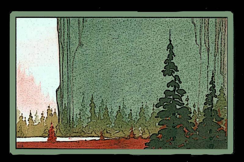 forest glade.jpg