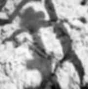 Quarantaine ombre-076-8.jpg
