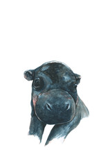 hippo 3.jpg