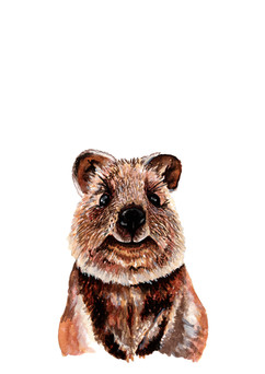 quokka adjusted.jpg