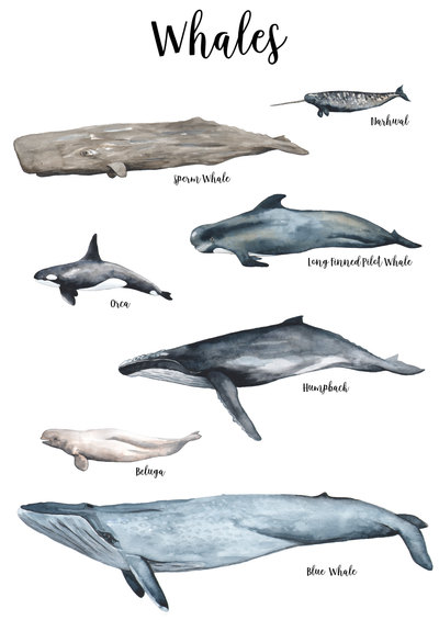 whales collection 2 1.jpg