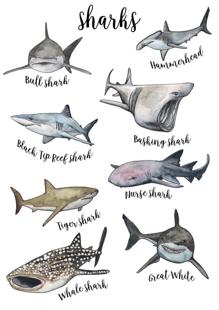 sharks collection font.jpg