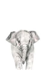 elephant watercolour adjusted.jpg