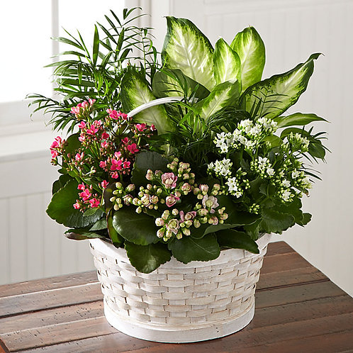 Blooming indoor plant basket