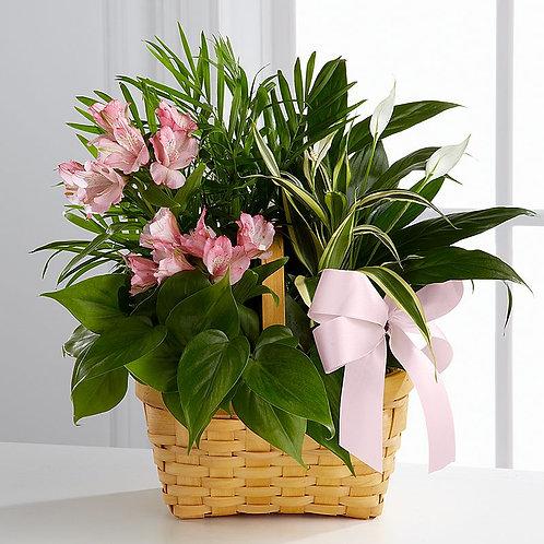 Indoor Plant Cluster
