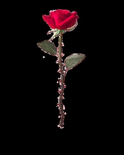 roos.png