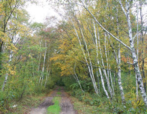 mect-woods295x230.jpg