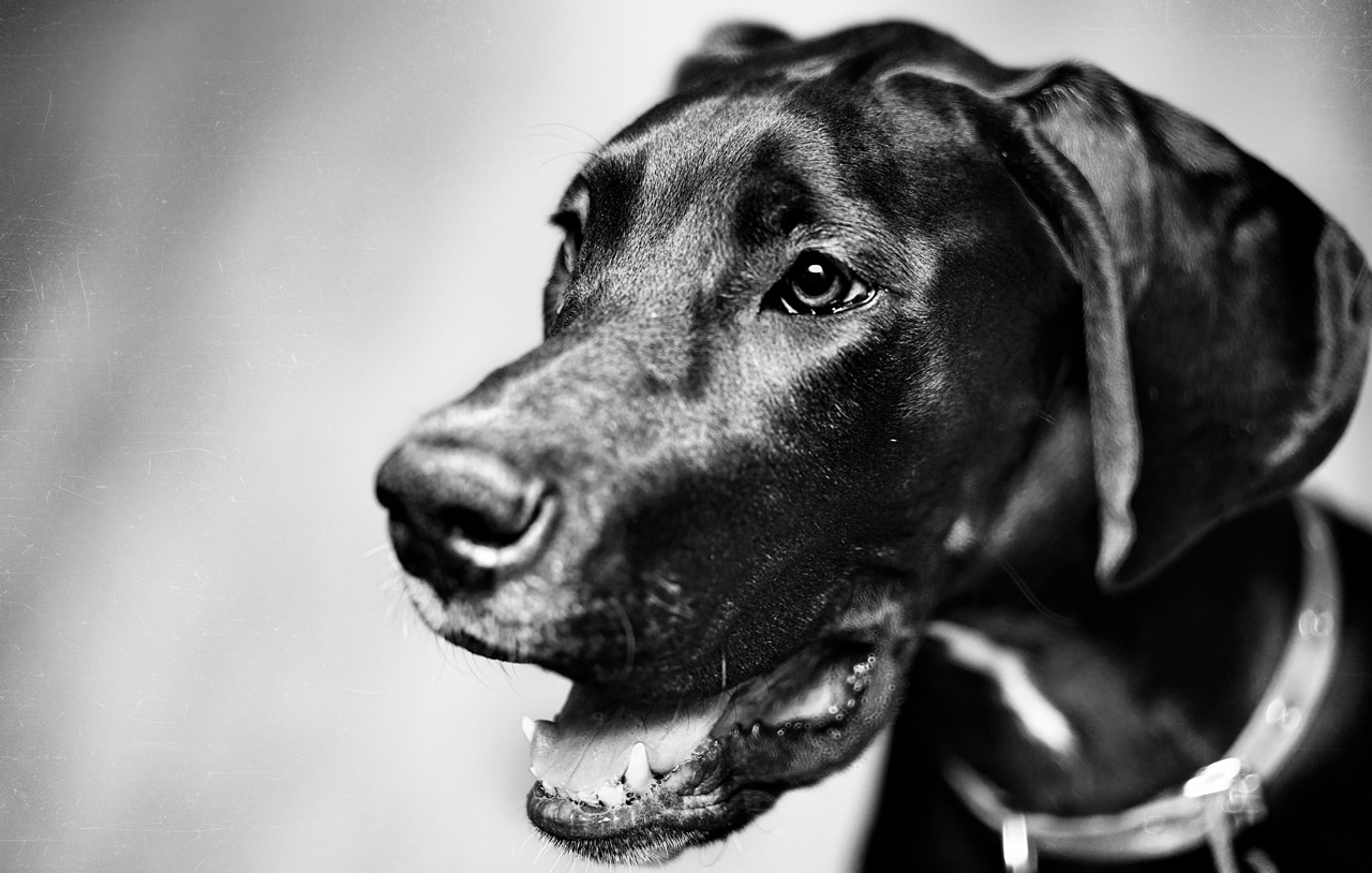 Professional Dog Photography small