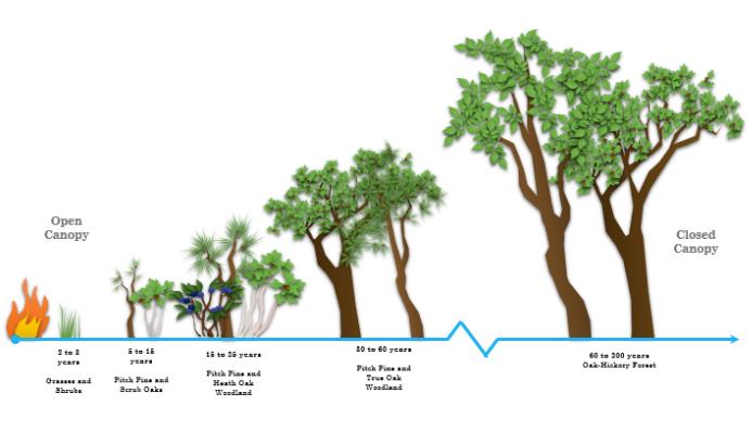 Pine Barrens 1