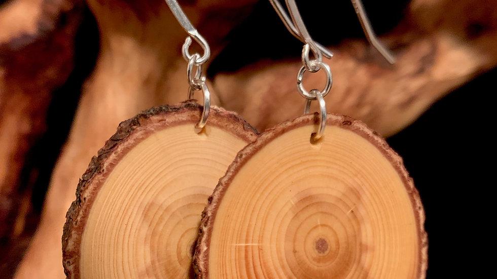 Big Beatle kill pine Wooden Circles