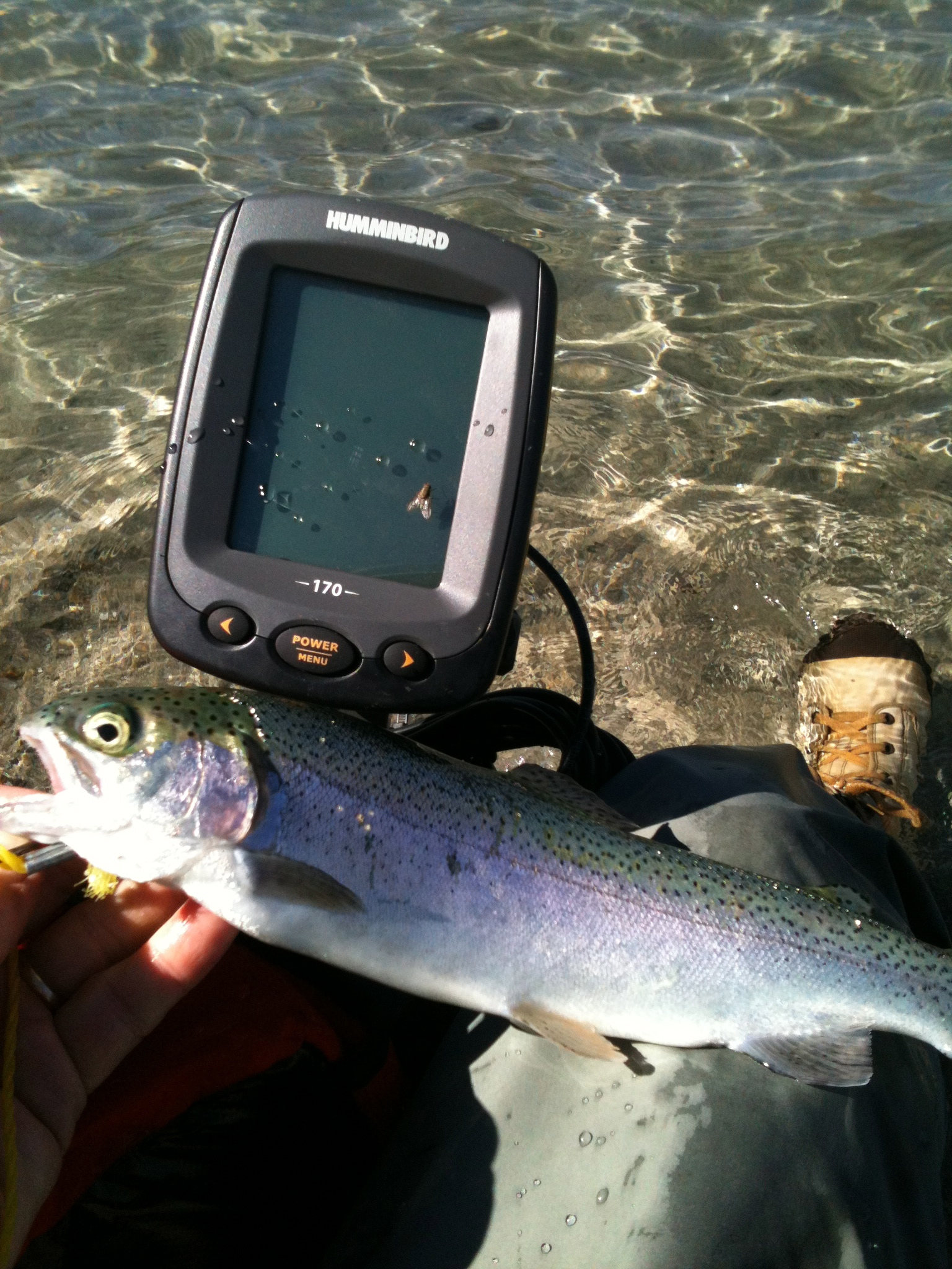 trout caught on fish finder