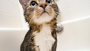 How to groom & bath a cat