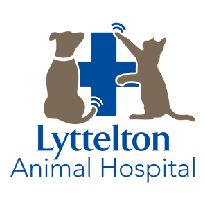 Lyttelton Animal Hospital