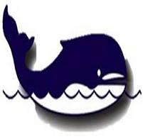 somemma mamíferos marinos lobos marinos cetáceos manatí