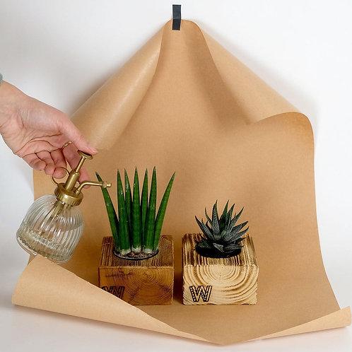 mini-Chock mit Pflanze