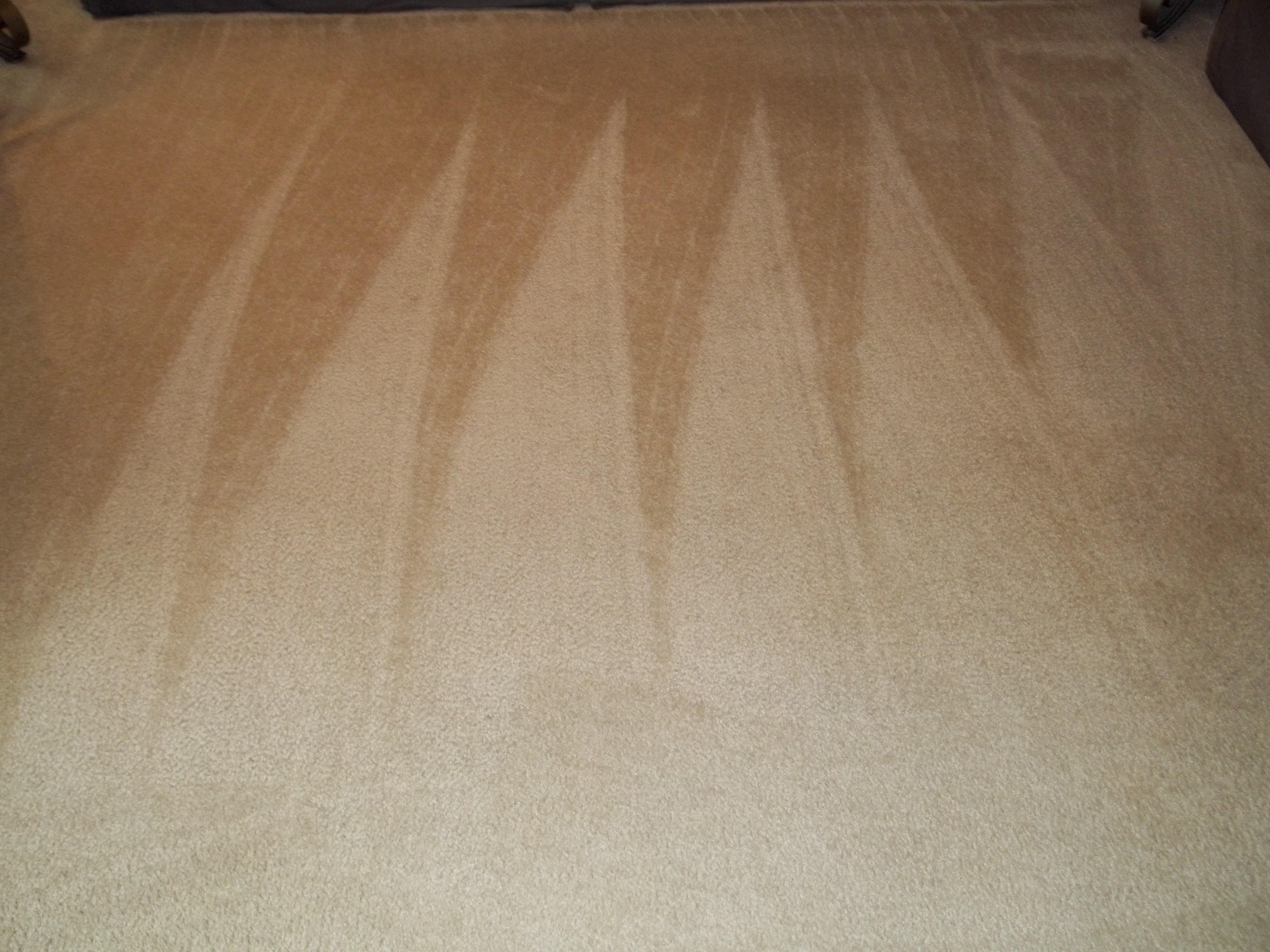 clean-carpets-tan-Team-Clean-Colorado-Residue-Free-Carpet-Cleaning-Loveland