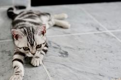 adorable-animal-baby-479009 (1)-min