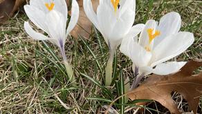 A Daily Devotion for Thursday, April 8