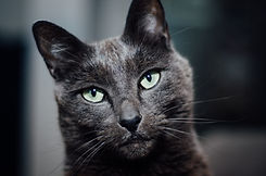 photo of Kevin the cat
