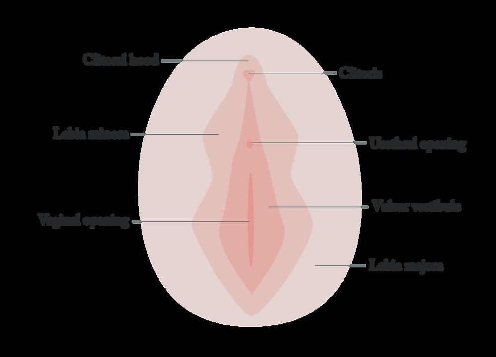 Female vulva and vagina anatomy yoni soap