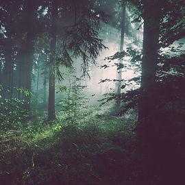 wolfgang-frick-wAVlWo84SCU-unsplash_edit