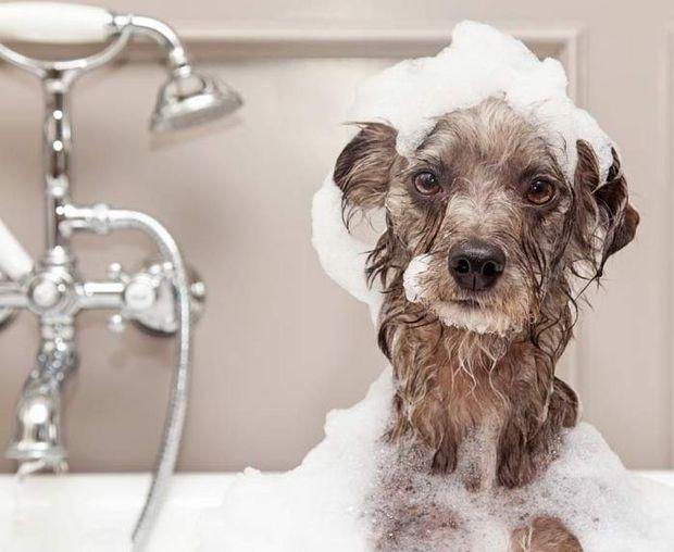 Dúvidas sobre banhos - PARTE 1