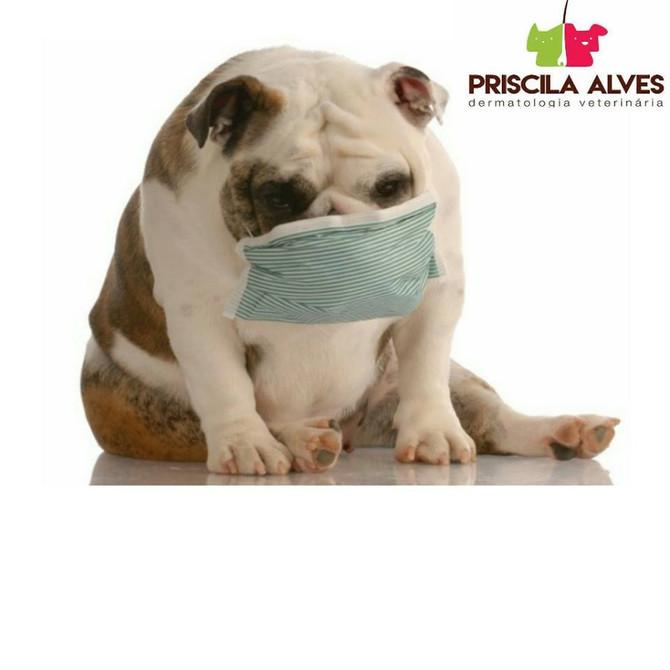 Seu cão está com cheiro ruim?
