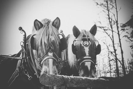 Sleigh Ride - Print-100.jpg