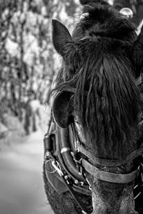 Sleigh Ride - Print-56.jpg