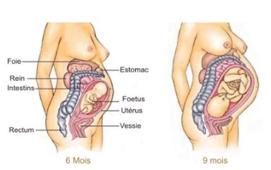 Ostéopathe paris    La grossesse