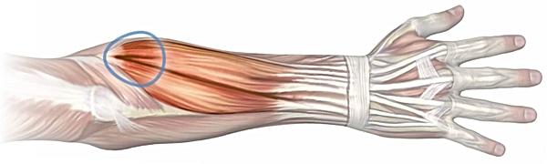 Tendinite du coude ostéopathie | Ostéopathe paris 11