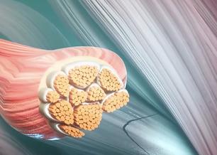 ostéopathie fascia paris, fasciathérapie, ostéopathie tissulaire, ostéopathe fascia , ostéopathie fasciale