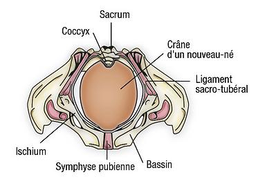 Ostéopathie grossesse paris | Ostéopathe femme enceinte Paris