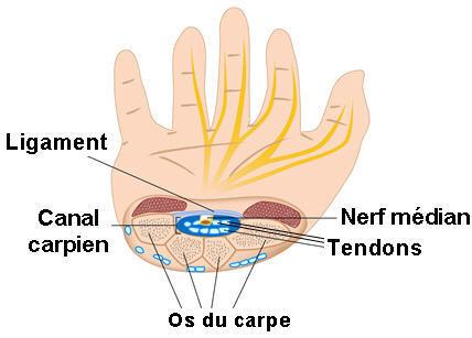 Ostéopathe paris 18 | Nerf Médian