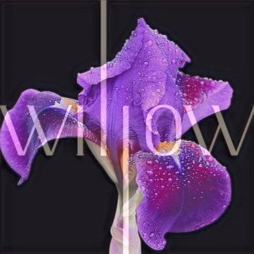 A fleur de peau - recharge