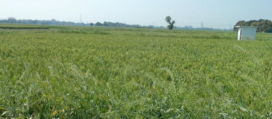 Fields 4.jpg