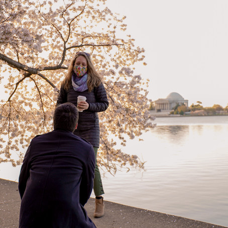 A Cherry Blossom Proposal