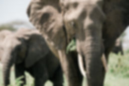 Kin Travel Elephants