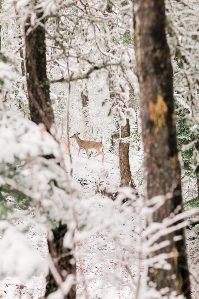 Deer Between the Trees