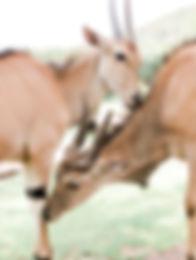 Kin Travel Safari Animal Conservation