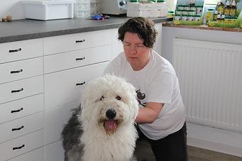 Behandlung Hund