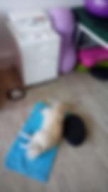 Hund bei Horizontaltherapie