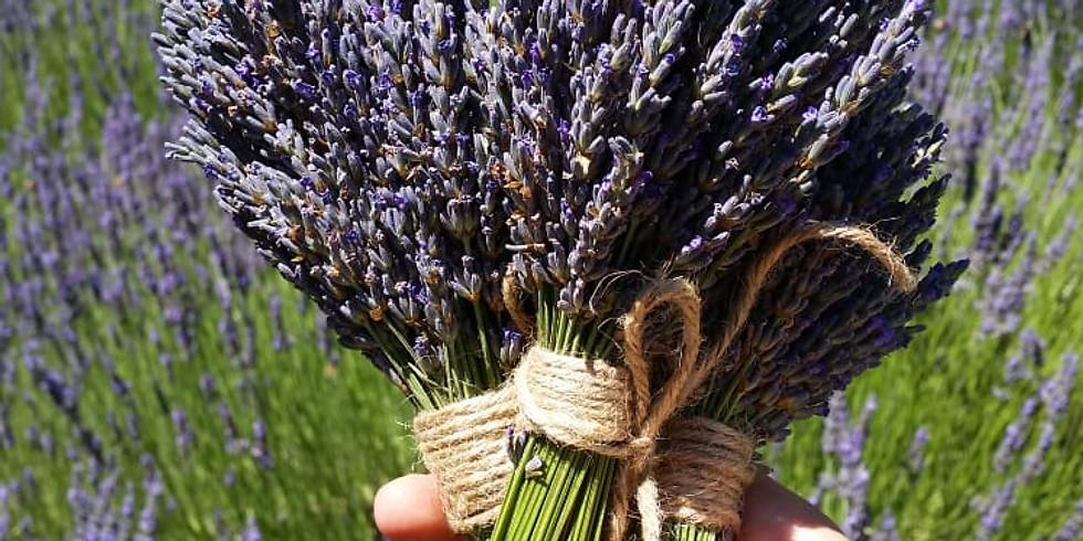It's Lavender Harvest Time!- Mid Jun - Aug