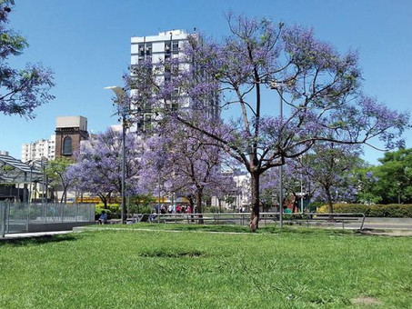 Repensando las ciudades. Arbolado Urbano