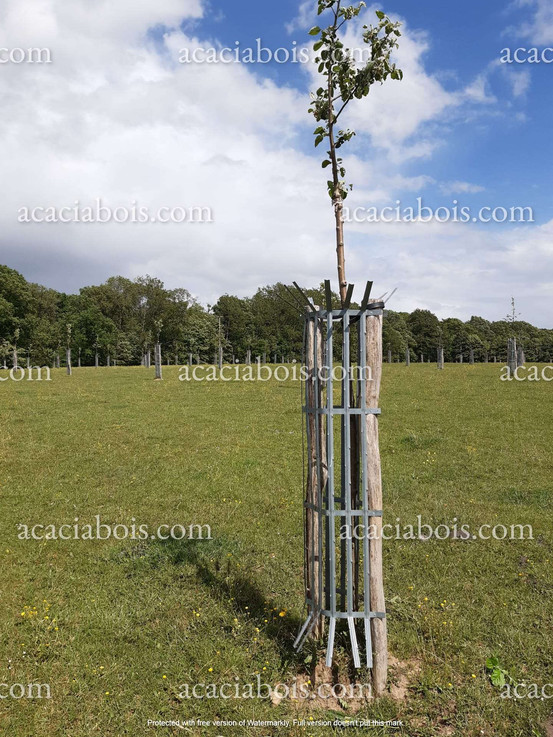 2.5m_8-10cm_piquets_acacia_ronds_protect
