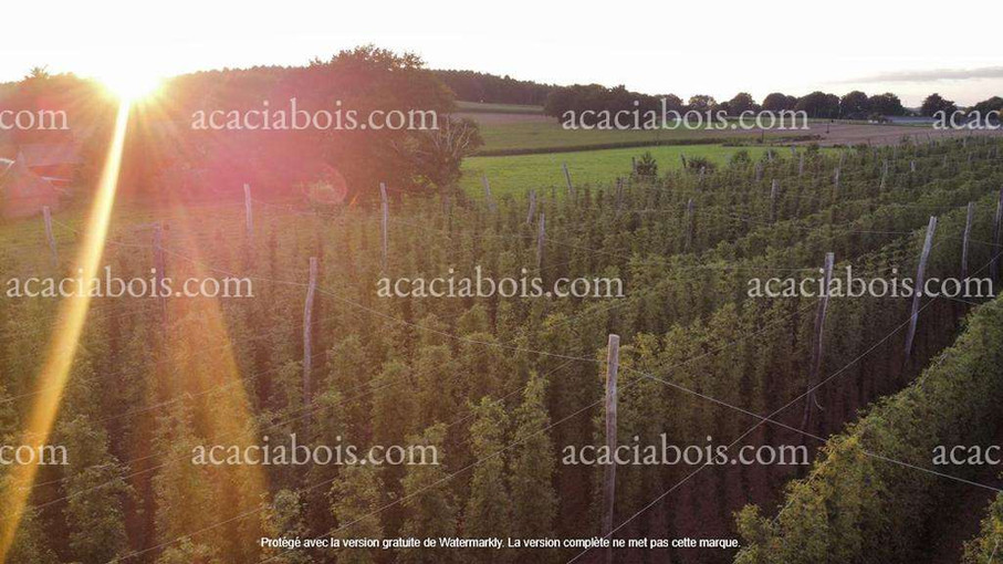 Houblonnière_bio_poteaux_acacia.jpg
