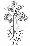 Planter 1 arbre pour 1m3 - small.jpg