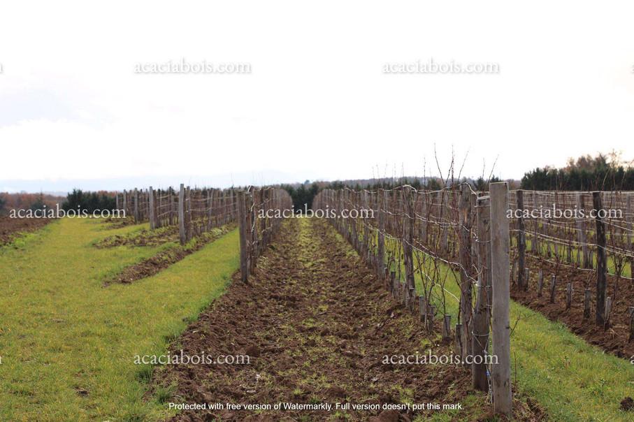 Piquets_acacia_viticulture.jpg