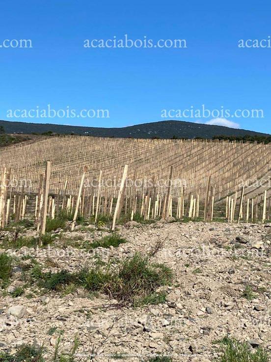 Piquets_acacia_vignes_terrain_caillouteu