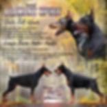 доберман купить адамант спирит щенки